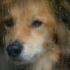 Rainy Day Dog by Gazart