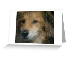 Rainy Day Dog Greeting Card