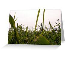 grassy plains Greeting Card