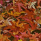 Carpet Of Leaves by Robert Abraham