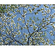 Spring Floral Sky Photographic Print