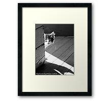 #633    Peeking Around The Corner Framed Print