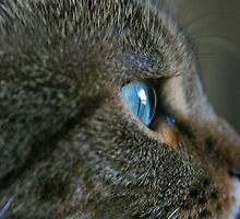 My itty bitty kitty by jdkerby