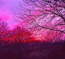 Mid Winter Sunset - Cheshire by John Brotheridge