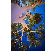 The Ghost Gum, 27 February 2008 Photographic Print