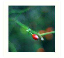single red berry Art Print
