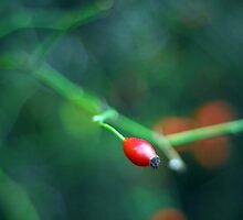 single red berry by Lindy deMelo