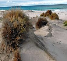White sandy beach. by nJohnjewell