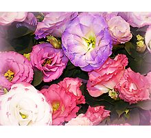 Lisianthus as beautiful  as any Flower Photographic Print