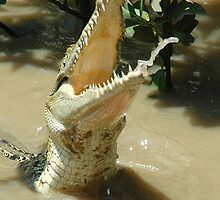Crocodile. by nJohnjewell