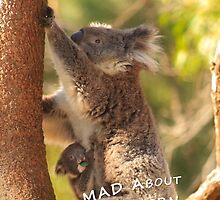 Koala & Cub - MAD About Western Australia (Galaxy Case) by Dave Catley