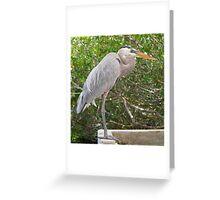 Great Blue Heron at Santa Cruz Greeting Card