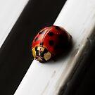 Lady Bug by Areej