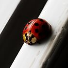 Lady Bug by Areej Obeid