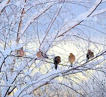Birds of a feather by Karen Cook