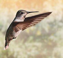 Humming Bird by BluAlien