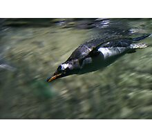 Fast Penguin Photographic Print