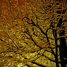 Tree at Night on a Winter's Eve.......  by Larry Llewellyn