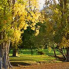 Autumn in Port Arthur, Tasmania by groophics