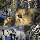Montage - Africa - wildlife  by cascoly