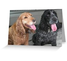 Cara and Sheba, biscuits please! Greeting Card