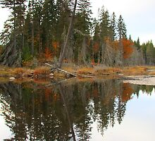 Algonquin Reflections II by Dave Law