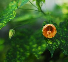 bud by Lindy deMelo