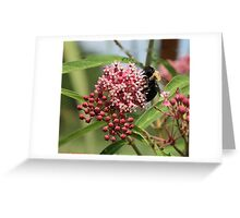 BEE WARE Greeting Card