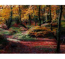 Fairy Hill Photographic Print