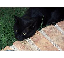 Stray Black Cat Photographic Print