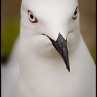 The Gull! by Rod Noendeng