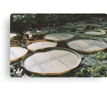 Lilly Pads in Swamp Canvas Print