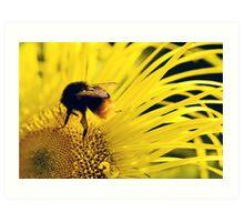 Flower Bee Art Print