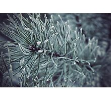 Siberian Winter 2 Photographic Print