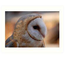 Profile of a Barn Owl Art Print