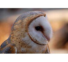 Profile of a Barn Owl Photographic Print