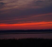 Tranquil Red by kimbarose