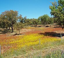 Alentejo - Flowered fields and cork oaks by presbi