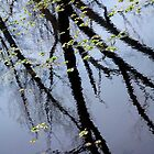 Reflected Willows by MaupinPhoto
