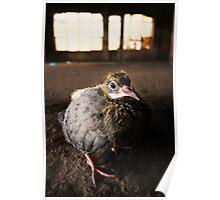 Baby Bird Poster