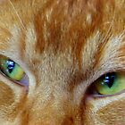 Cats Eyes by ienemien