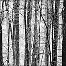 Rhizomes I: Winter (re)Called by Mary Ann Reilly