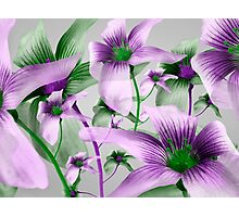Lilies Collage Art in Green and Violet Colors Photographic Print