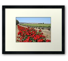 Winery Roses Framed Print