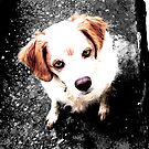 Brittany Spaniel by BeckyCollins