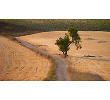 almond tree on the country road Photographic Print