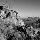 Desert Vantage by Michener