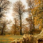 Autumn Trees by Azza