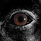Eye by peyote
