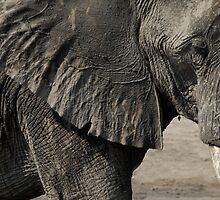 Elephant  by franceslewis